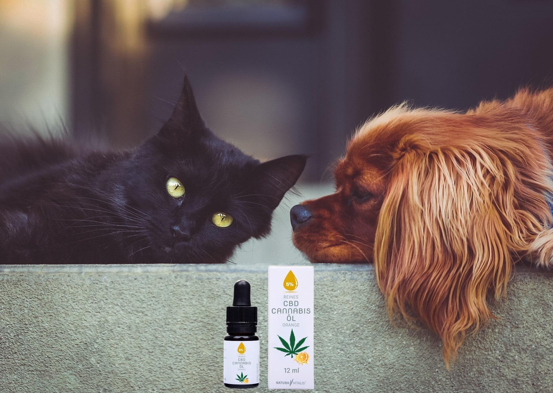 CBD Öl Tiere  Hund und Katze